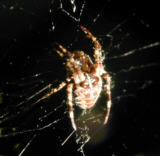 Man's radio ear 'hears the whisper of remote galaxies...Like the orb spider, man lies at the heart of it, listening.'